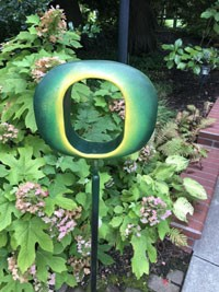 Oregon 'O' in the garden